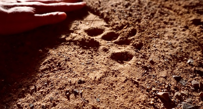 Bear track near our front porch