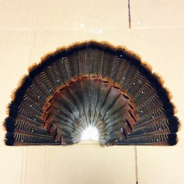 wild turkey tailfeathers fan