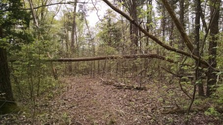 partially fallen trees in the woods
