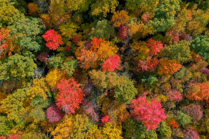fall color Tennessee drone photo