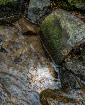 salamander in a creek with mossy rocks