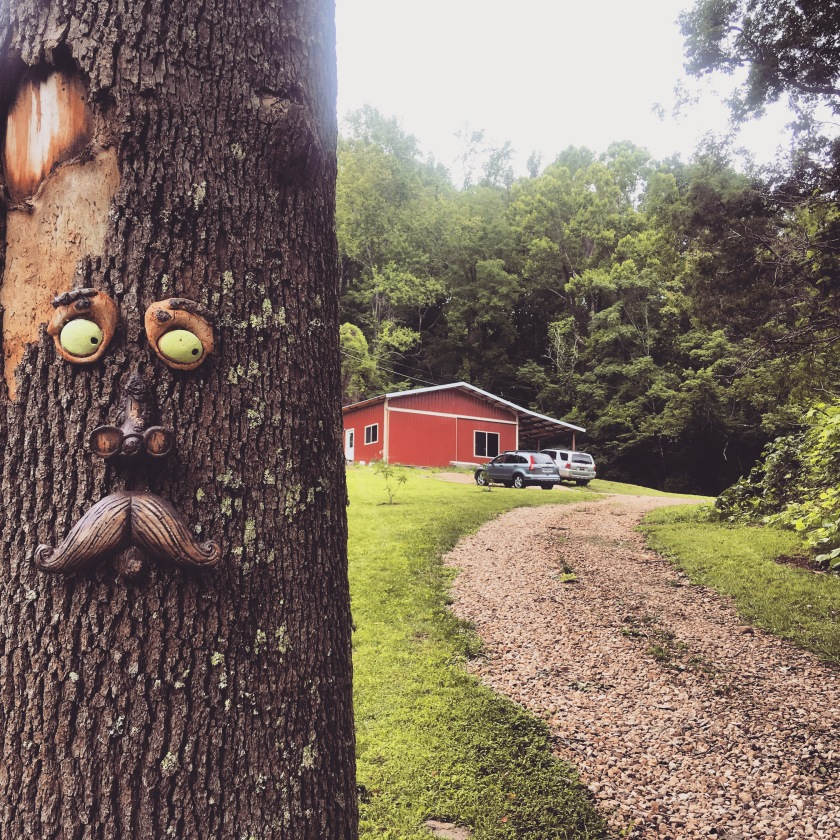 suspicious looking tree face by driveway to red barn