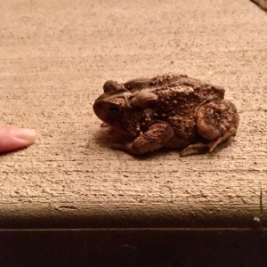 toad next to finger for scale