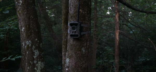 game camera on a tree