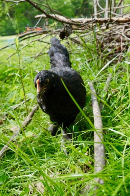 Beebs-Woodpile