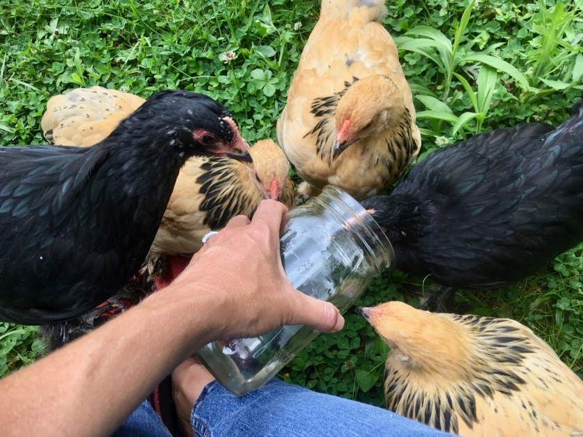 ChicksandWaterJar